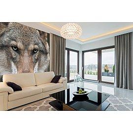 """Фотопанно холст """"Волк"""", 300*270 см"""