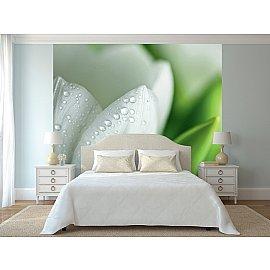 "Фотопанно холст ""Белый тюльпан"", 300*270 см"