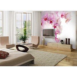 """Фотопанно полосы """"Розовая орхидея"""", 300*270 см"""