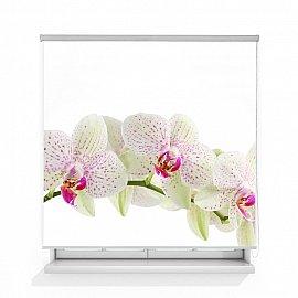 """Рулонная штора ролло лен """"Орхидея веточка"""", 160 см"""