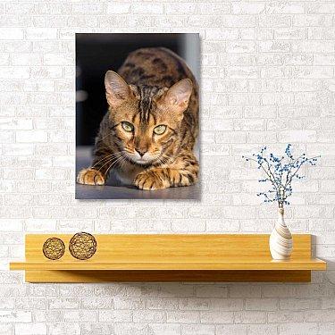 """Картина """"Бенгальский кот"""", 40*60 см"""